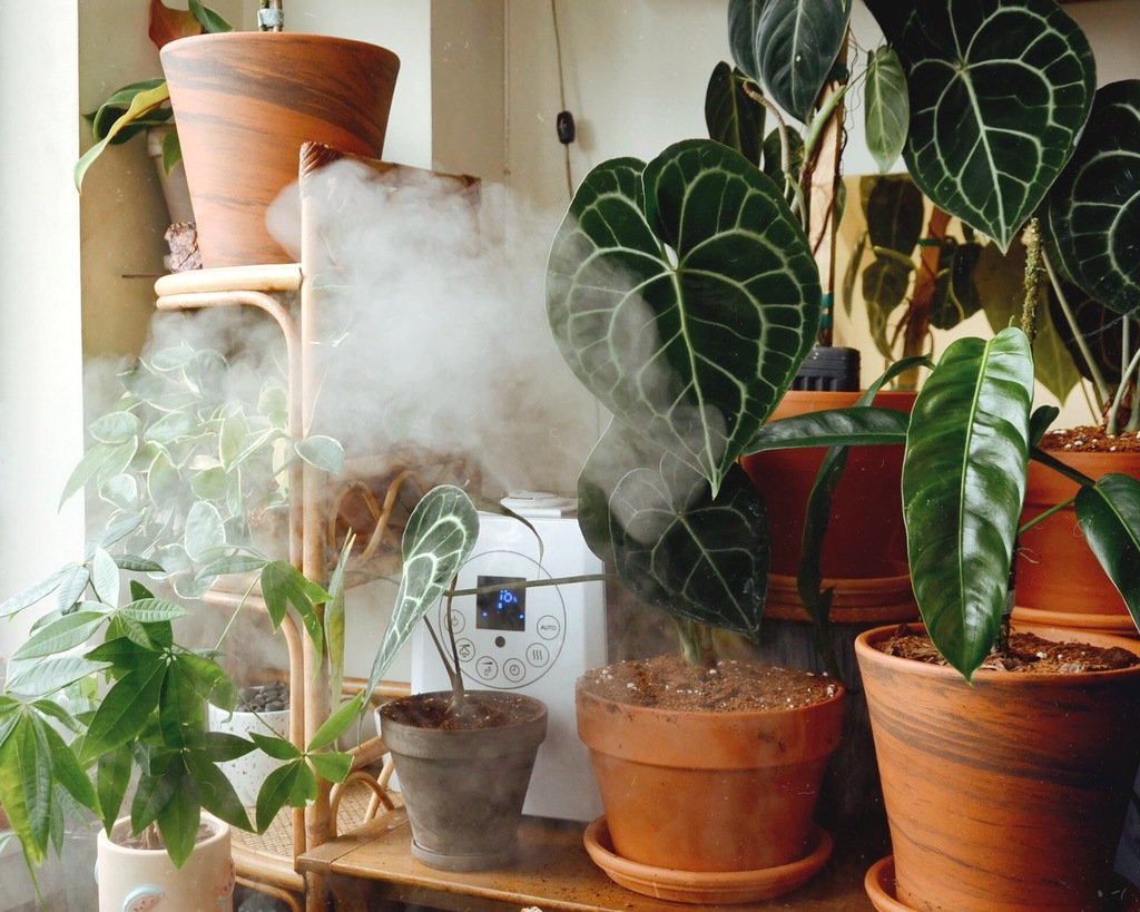 Humidifiers Plants Answering All